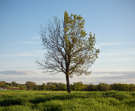 Single Tree「Tree with leaves on only one half of it's branches.」:スマホ壁紙(11)