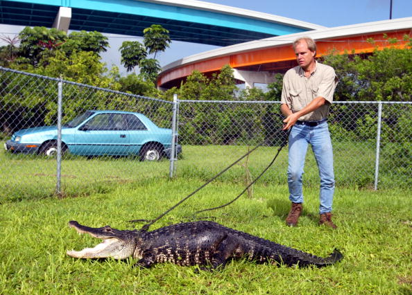 Irritation「Alligator Trapper in Miami」:写真・画像(7)[壁紙.com]