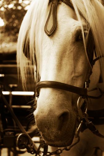 Horse-drawn carriage「辻馬車」:スマホ壁紙(14)