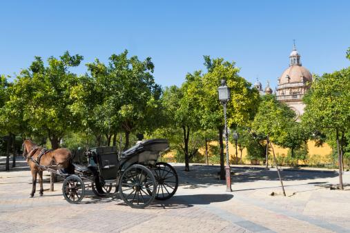 Horse-drawn carriage「Horse and carriage near Jerez Alcazar」:スマホ壁紙(6)