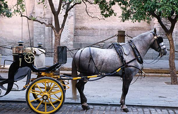 Horse and carriage, Sevilla, Spain:スマホ壁紙(壁紙.com)