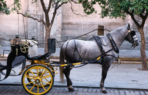 Horse「Horse and carriage, Sevilla, Spain」:スマホ壁紙(10)