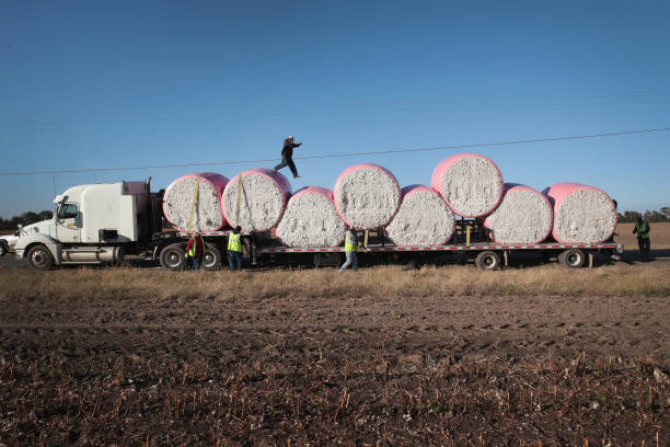 Despite Hurricane Damage, Cotton Production Expected To Rise In 2017:ニュース(壁紙.com)