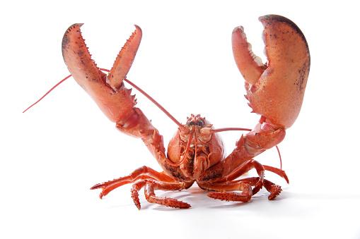 Claw「lobster」:スマホ壁紙(18)