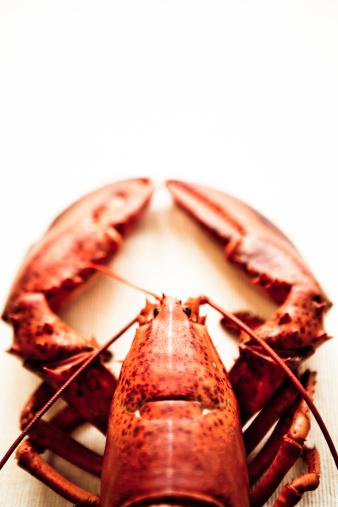 Claw「Lobster」:スマホ壁紙(5)
