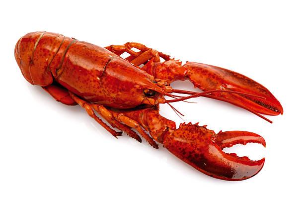 Lobster:スマホ壁紙(壁紙.com)