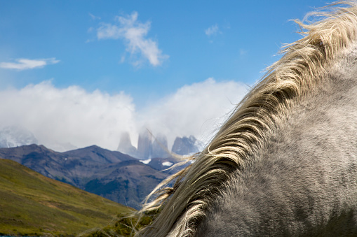 Stallion「Abstract shot of white horse mane with dramatic snow covered mountain peaks in background.」:スマホ壁紙(18)
