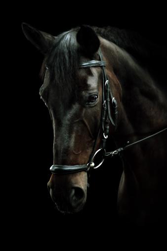 Horse「Bay Horse Portrait」:スマホ壁紙(0)