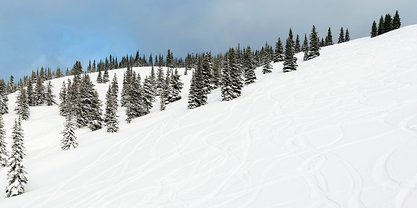 Ski Resort「fresh powder ski tracks」:スマホ壁紙(4)