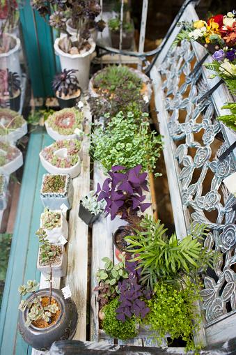 Flower Shop「Various potted plants for sale」:スマホ壁紙(15)