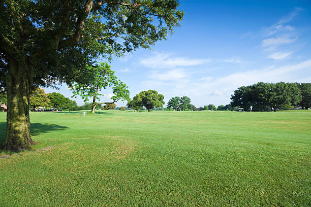 Golf Fields:スマホ壁紙(壁紙.com)