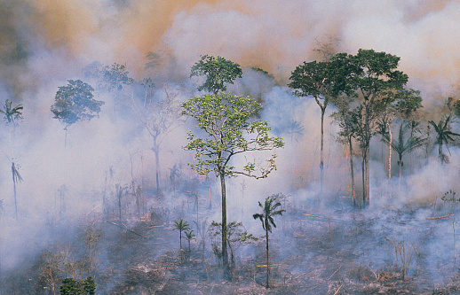 Amazon Rainforest「Amazon fires」:スマホ壁紙(11)