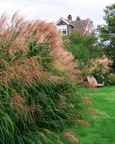 Inflorescence「Ornamental grass , yard , and house」:スマホ壁紙(18)