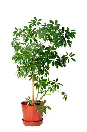 植物「モデルの植物」:スマホ壁紙(13)