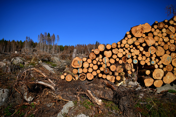 Plant Bark「As Summer Temperatures Rise Bark Beetle Infestations Intensify」:写真・画像(10)[壁紙.com]