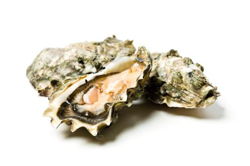 Mollusk「Oysters」:スマホ壁紙(16)