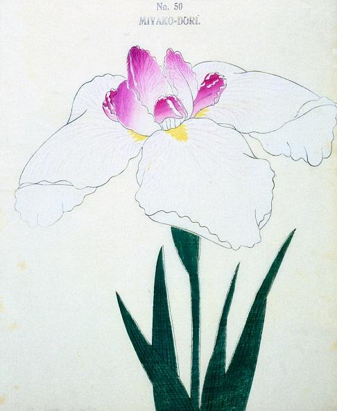 Petal「Miyako-Dore」:写真・画像(15)[壁紙.com]