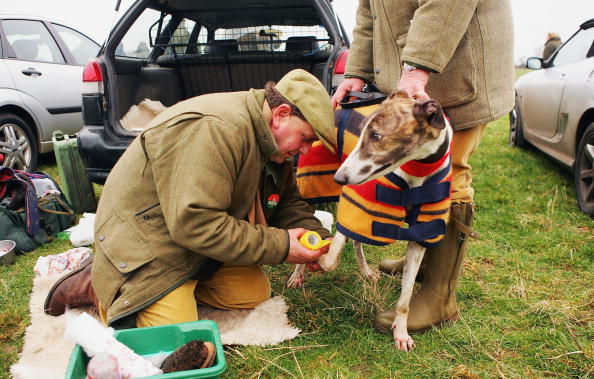 Care「GBR: Locals Compete Dogs During Hare Coursing Event」:写真・画像(14)[壁紙.com]