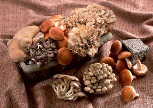 ヒラタケ「Mushrooms」:スマホ壁紙(14)