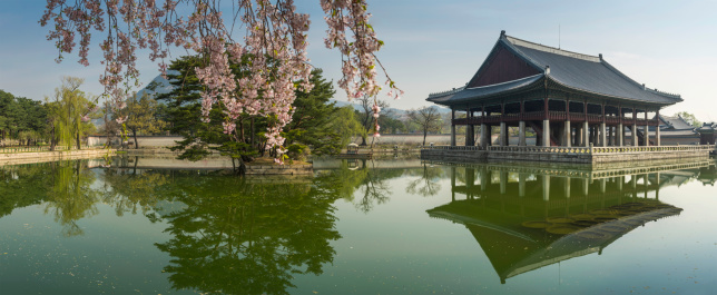 South Korea「Seoul spring blossom over Gyeongbokgung pavillion reflecting lake panorama Korea」:スマホ壁紙(18)