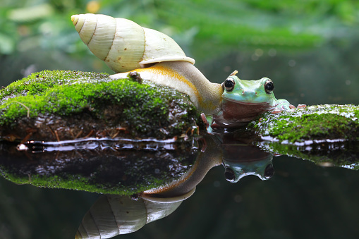 カタツムリ「Snail crawling towards a dumpy frog」:スマホ壁紙(8)