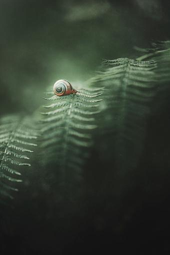snails「Snail crawling on leaf」:スマホ壁紙(6)
