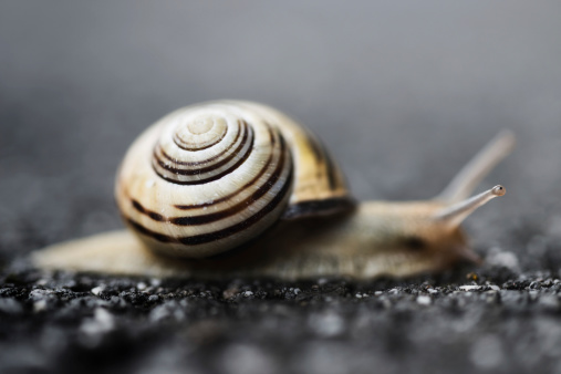 snails「Snail crawling on asphalt at rainy day」:スマホ壁紙(16)