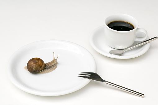 カタツムリ「タニシ証言にホワイトのプレート、コーヒーカップに」:スマホ壁紙(13)