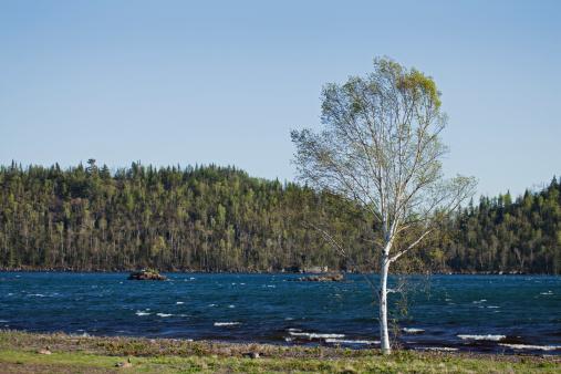 Great Lakes「Lone Tree Near Water」:スマホ壁紙(18)