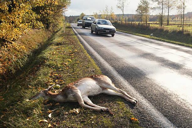 Animal lying besides the road:スマホ壁紙(壁紙.com)