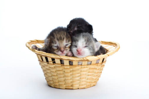 Kitten「Newborn kittens in a basket」:スマホ壁紙(19)