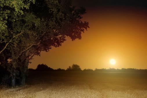 月「オレンジ昇る満月の景観」:スマホ壁紙(0)