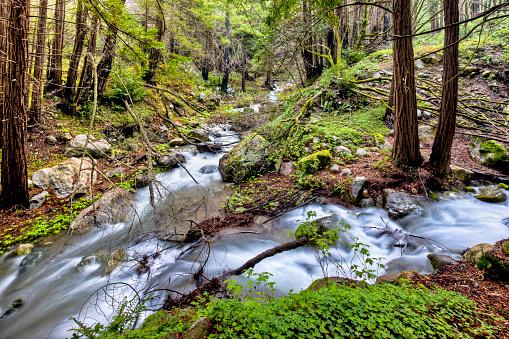 Big Sur「Confluence in Limekiln State Park」:スマホ壁紙(15)