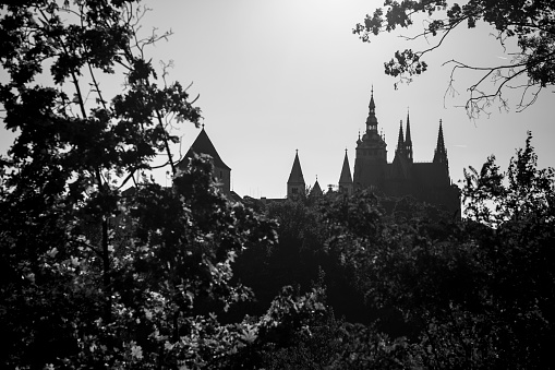 St Vitus's Cathedral「Spires of St Vitus Cathedral behind trees」:スマホ壁紙(1)