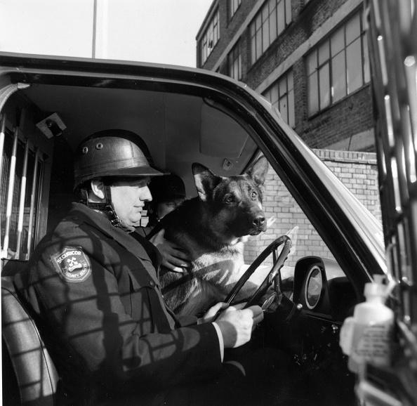 Tim Graham「Payroll Dogs」:写真・画像(8)[壁紙.com]