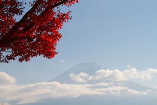 Japanese Maple「Red leaves of Japanese maple and Mt. Fuji, autumn」:スマホ壁紙(16)