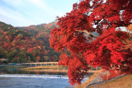 秋+京都「Red Leaves and Togetsu Bridge at Arashiyama, Kyoto, Kyoto, Japan」:スマホ壁紙(7)