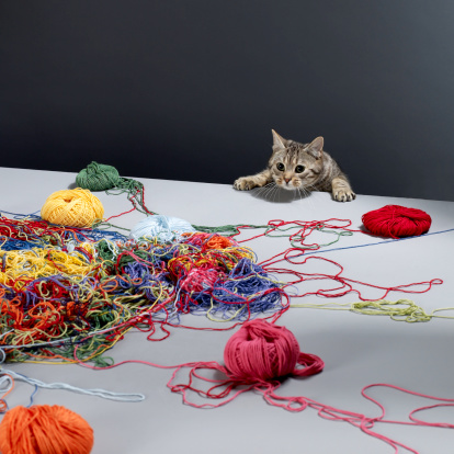Wool「Silver tabby cat climbing over edge of table looking at pile of wool」:スマホ壁紙(2)