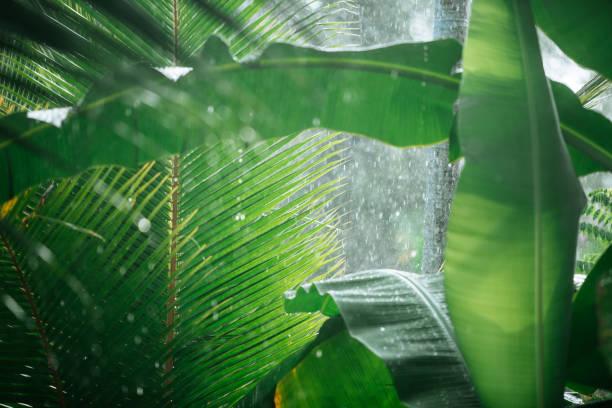 Rain in tropical woods:スマホ壁紙(壁紙.com)