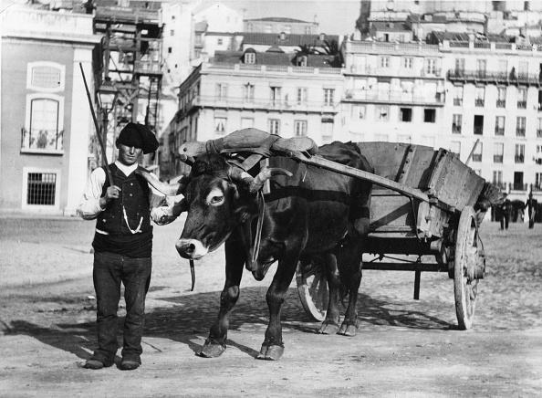 Domestic Animals「Bullock And Cart」:写真・画像(16)[壁紙.com]