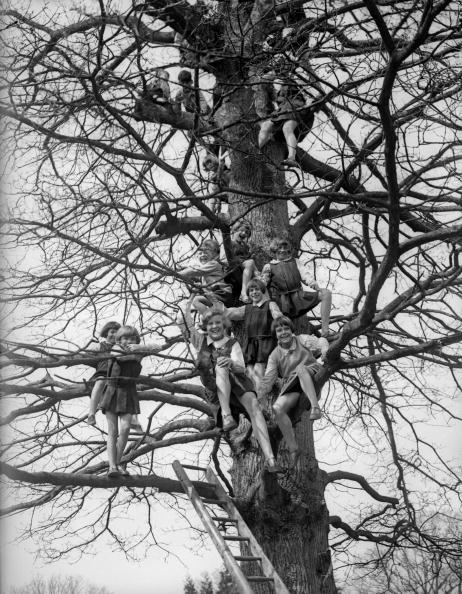 Tree「Nature Study」:写真・画像(11)[壁紙.com]