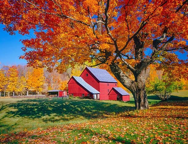 Vermont autumn with rustic barn:スマホ壁紙(壁紙.com)