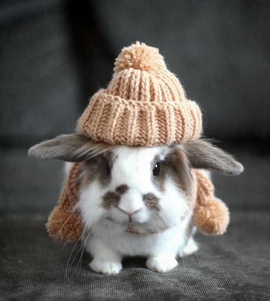 Rabbit「Pet bunny wearing knit hat in autumn」:スマホ壁紙(0)