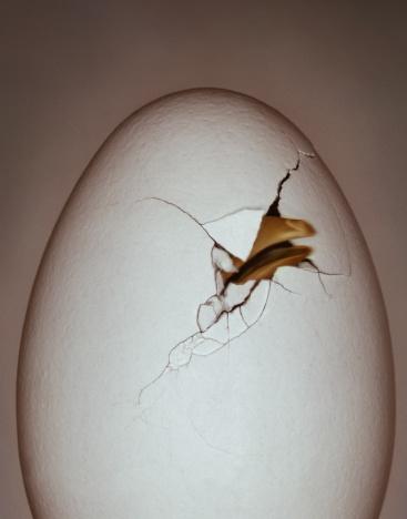 Animal Egg「Chick's beak breaking through eggshell (Digital Enhancement)」:スマホ壁紙(3)