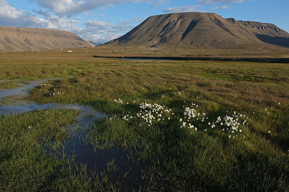 Archipelago「Summer Heat Wave Hits Svalbard Archipelago, Far North Of The Arctic Circle」:写真・画像(10)[壁紙.com]