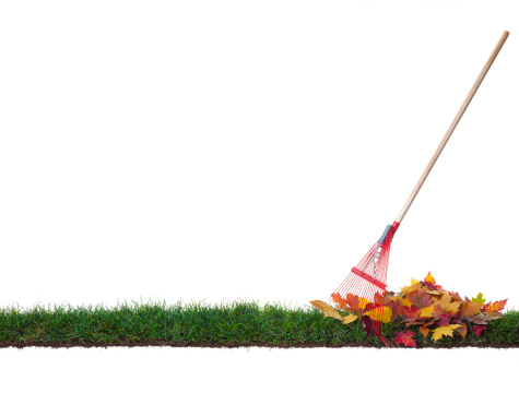 かえでの葉「絶縁熊手、リーブズ片上の芝生」:スマホ壁紙(0)