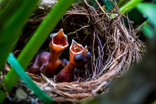 Baby animal「The hungry chicks 3」:スマホ壁紙(9)