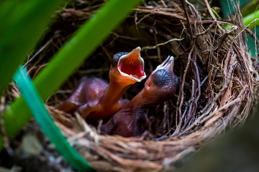 Baby animal「The hungry chicks 5」:スマホ壁紙(10)
