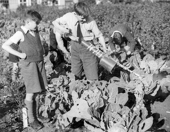 Cabbage「Evacuees Gardening」:写真・画像(13)[壁紙.com]
