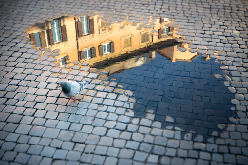 Pigeon「Roman cobblestone with puddle reflection and pigeon, Rome Italy」:スマホ壁紙(14)